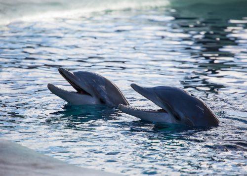 Delfines en Rancho Texas Lanzarote Park - Dolphins