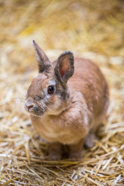 Conejo Común | Lanzarote Park