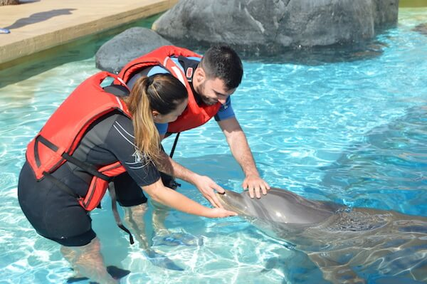 Interaccion Delfines - Dolphins in Rancho Texas Lanzarote Park