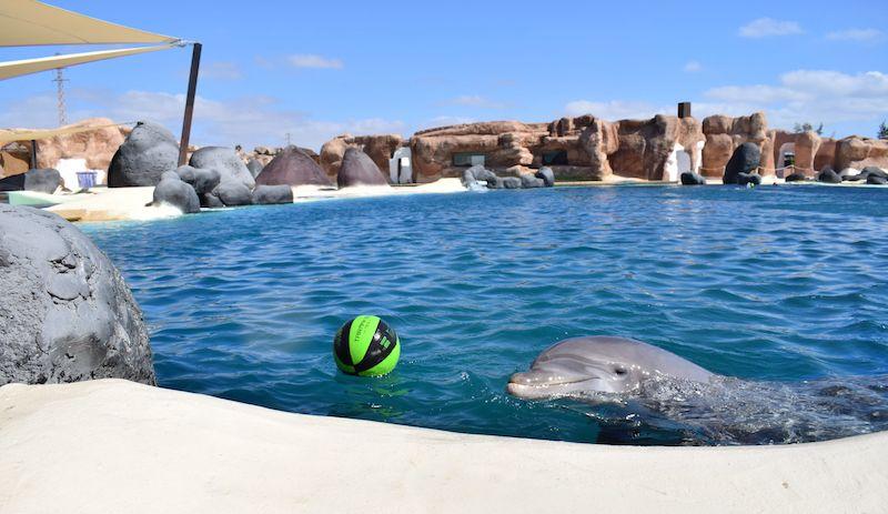 delfines-lanzarote-canary-islands-dolphins